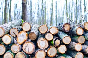 Common types of timber found in Australia